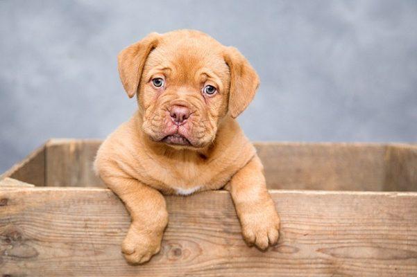 kleine hondenmand