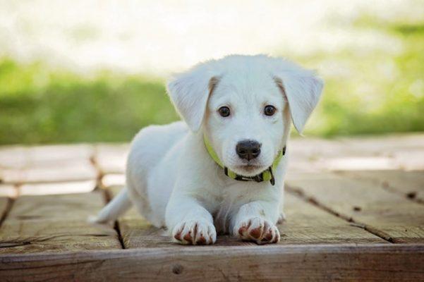 Lente Tips Voor Jouw Hond