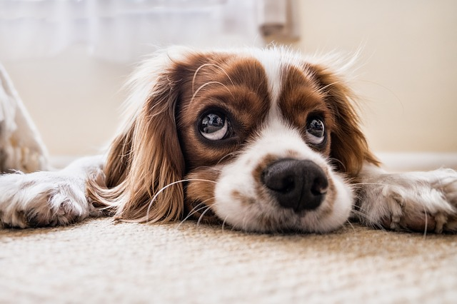 Waarom snuffelen honden aan de urine van andere honden